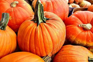 Large variety of pumpkins in cartons
