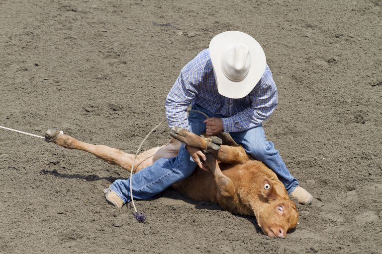 Tie-down roping