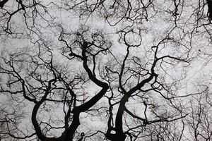 twisting winter trees in forest canopy with bare branches