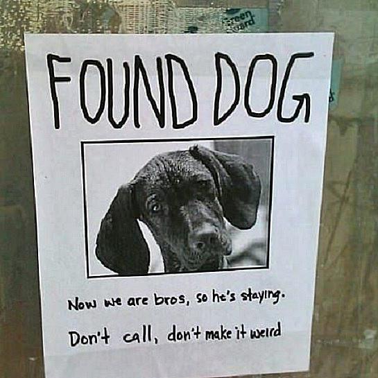 weird-dog.jpg