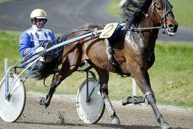 Pferdesport/Traben: Ostermeeting in Bahrenfeld 2004