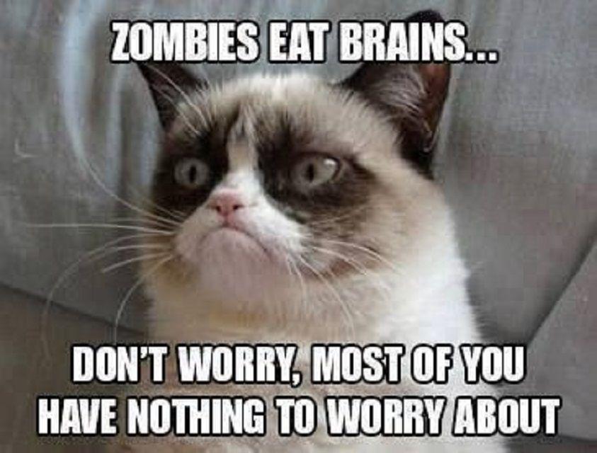 Grumpy Cat Reassures People That Zombies Eat Brains