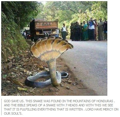 The Photo of a 7-Headed Snake: Urban Legend or Truth?