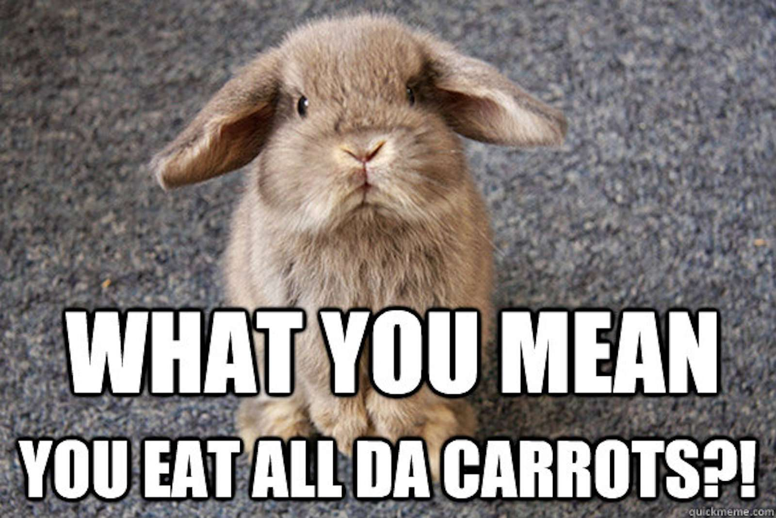 The 15 Funniest Animal Memes,Pale Lavender Lavender Bedroom Walls