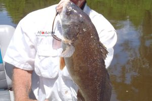 Freshwater drum caught on a jig and pig
