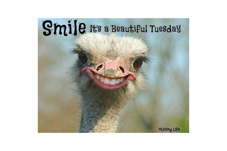 Ostrich smiling meme