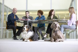 Businesspeople in a meeting with dogs