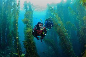 Scuba Diving near Catalina Island