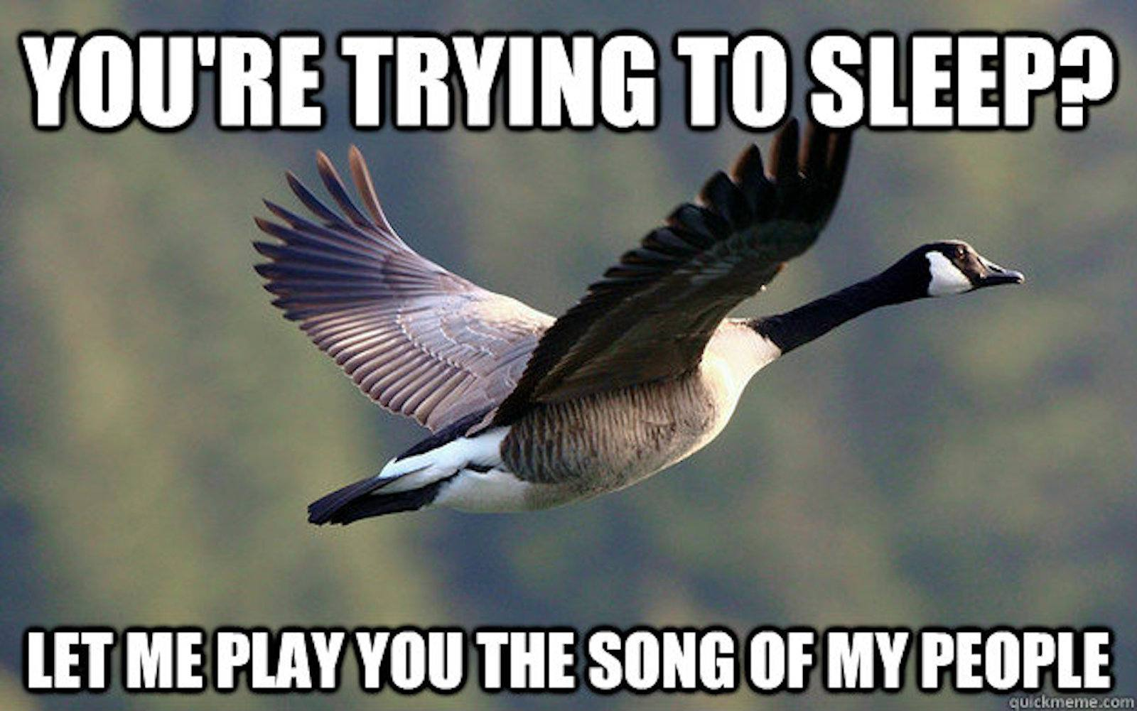 Goose Meme