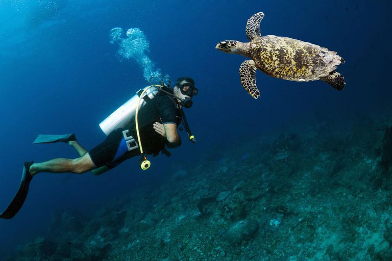 Fitness Levels Dive As Us Kids Get Older >> Requirements For Scuba Diving Age And Fitness
