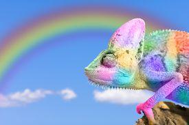 Chameleon rainbow imitation