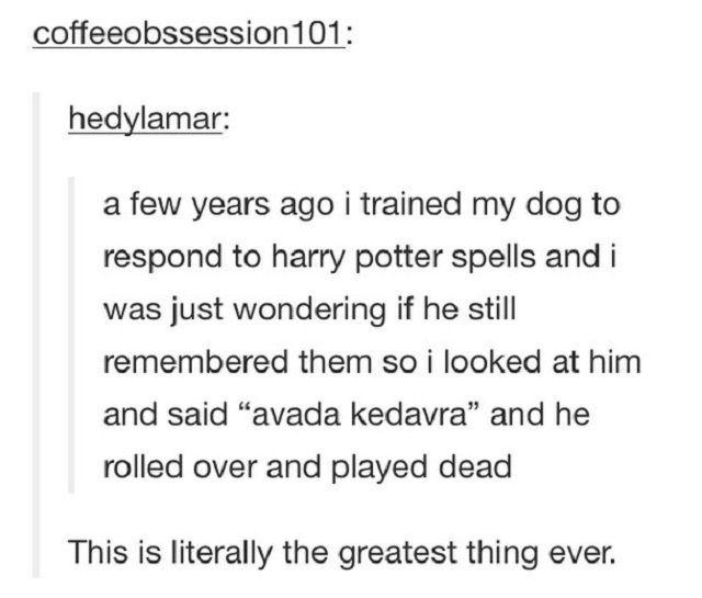 Dog responds to Harry Potter spells