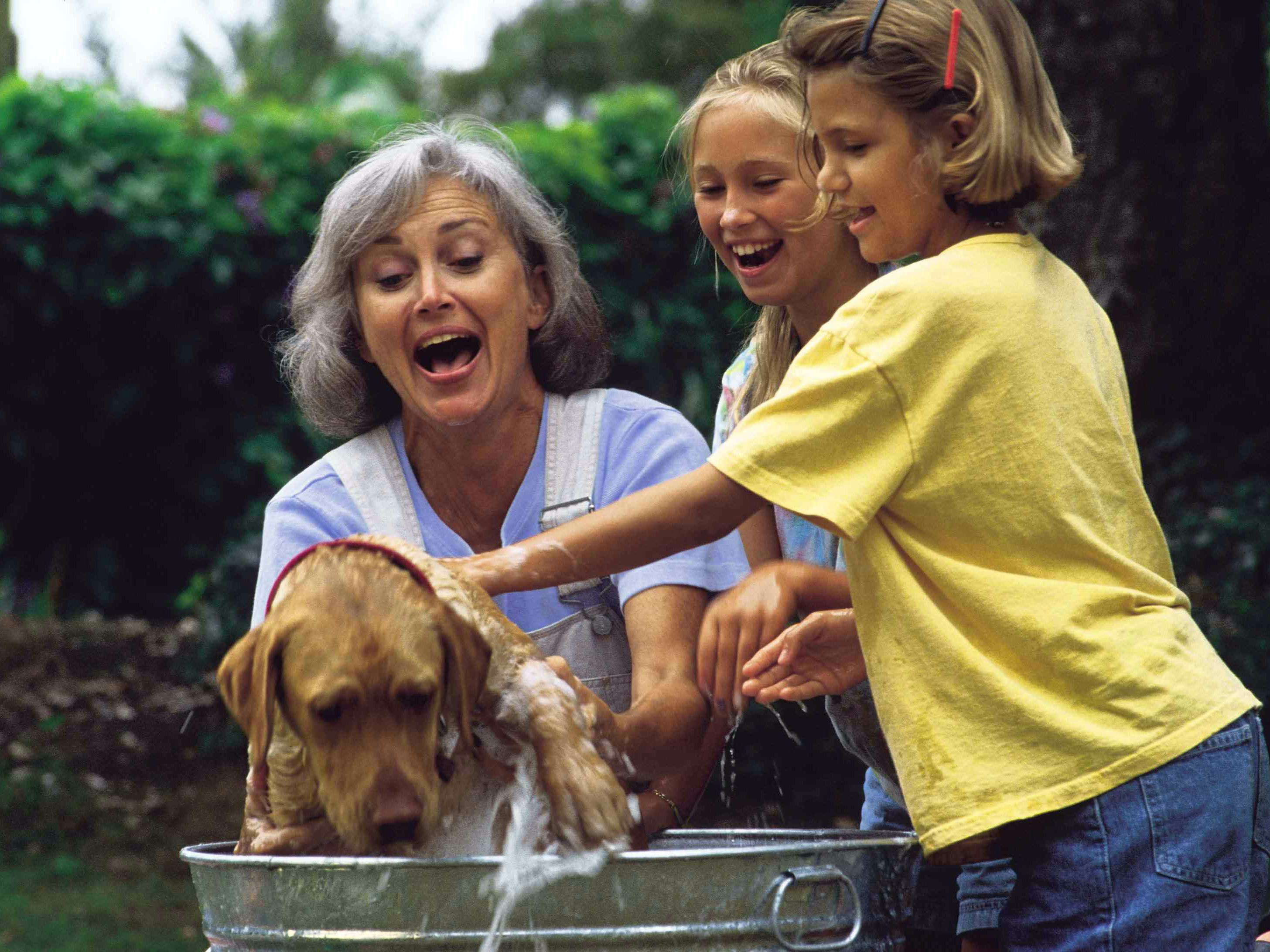 Pet Problems and Solutions for Grandparents