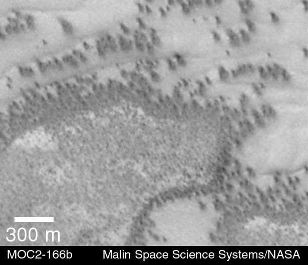Evidence for vegetative life on Mars?