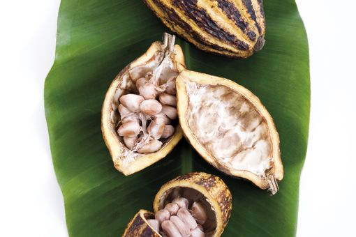 cacao pods on a leaf