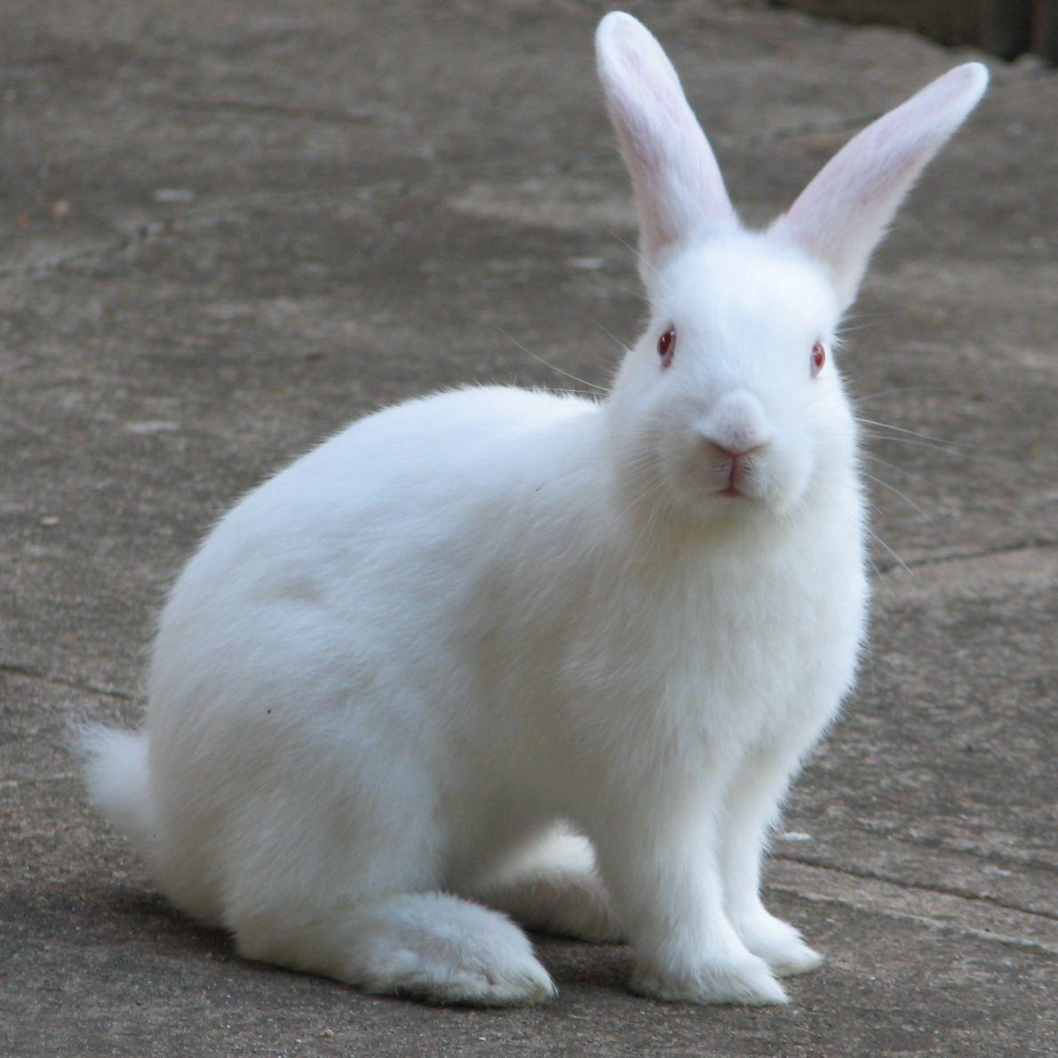 bunnycrop 56a26cc95f9b58b7d0ca1faf