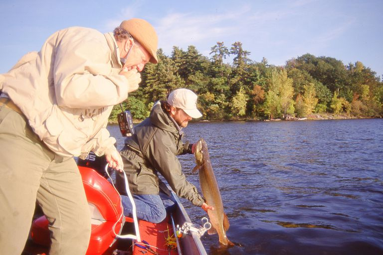 Fishermen pulling up a muskie catch.