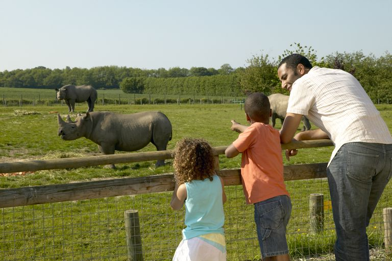 Family looking at a Rhino in Howletts Zoo, the huge safari enclosure protects species which would be endangered in the wild, Bekesbourne, Nr Canterbury, Kent, England. Additional Credit: Kent Tourism Alliance