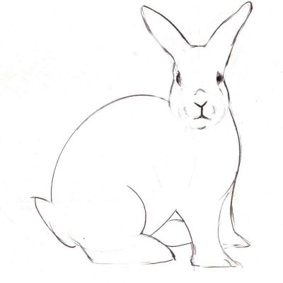 How To Draw A Realistic Bunny Rabbit