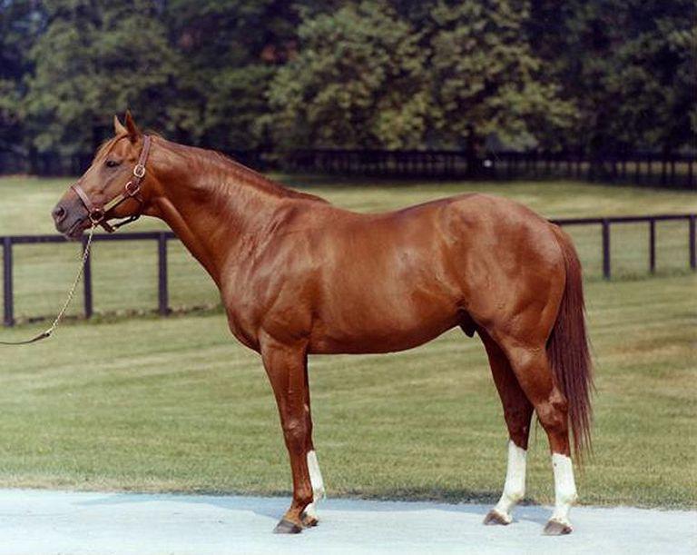 horse racing secretariat