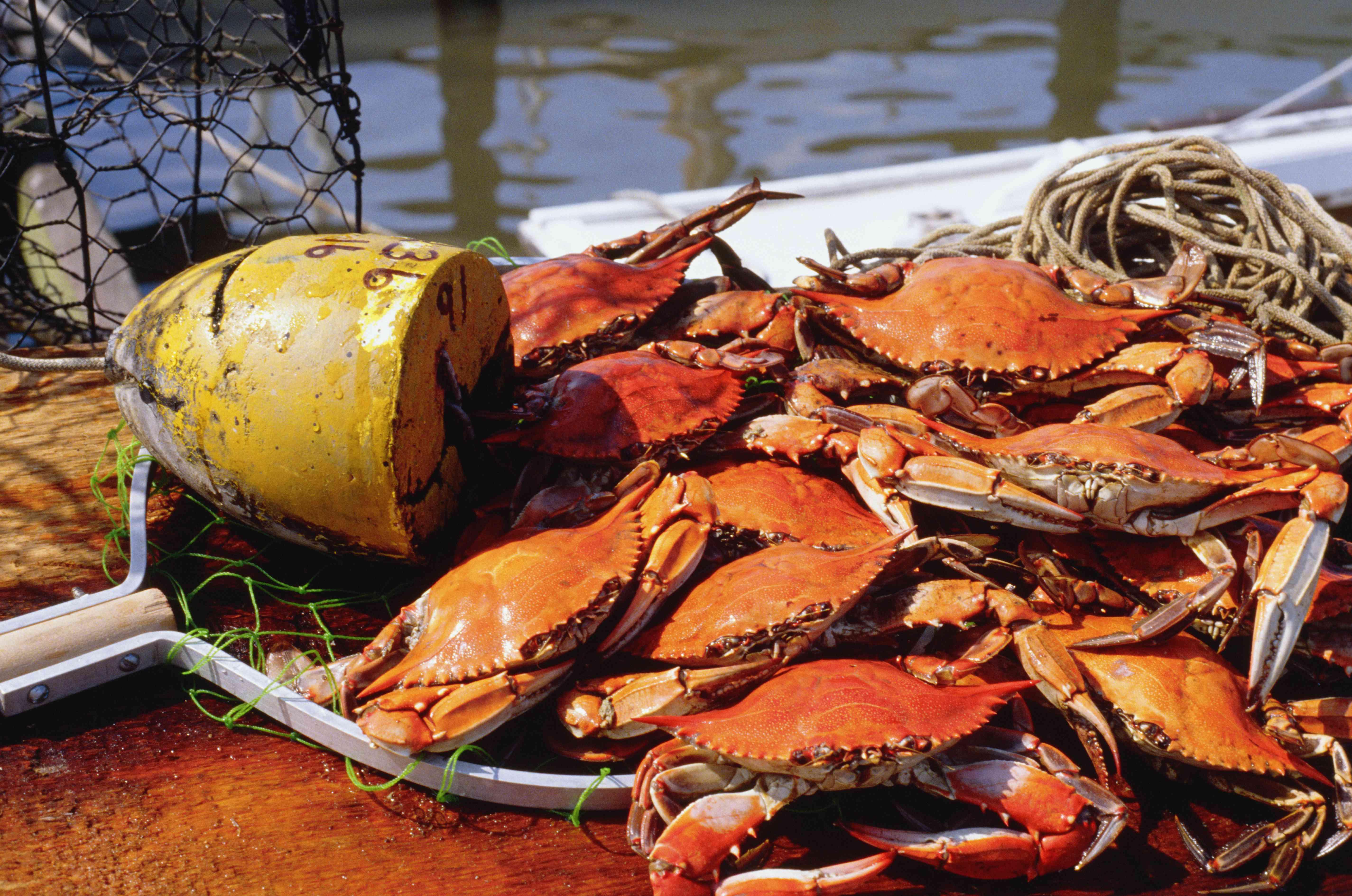 High angle view of crabs, Annapolis, Maryland, USA