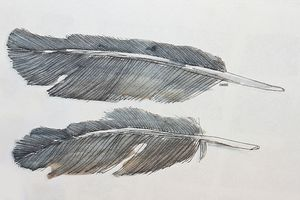 Pen and watercolor painting of feathers