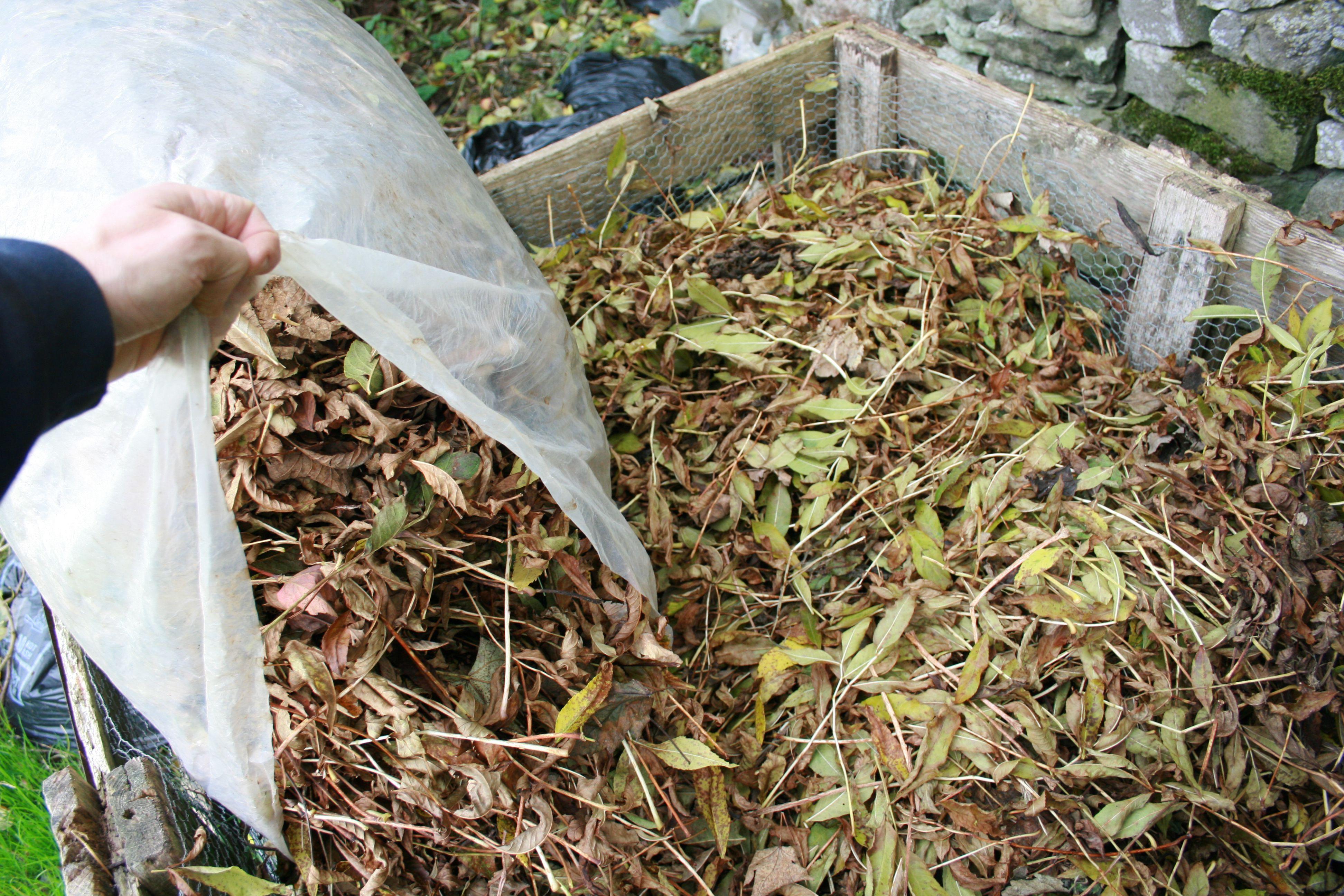 Making Leaf Mold