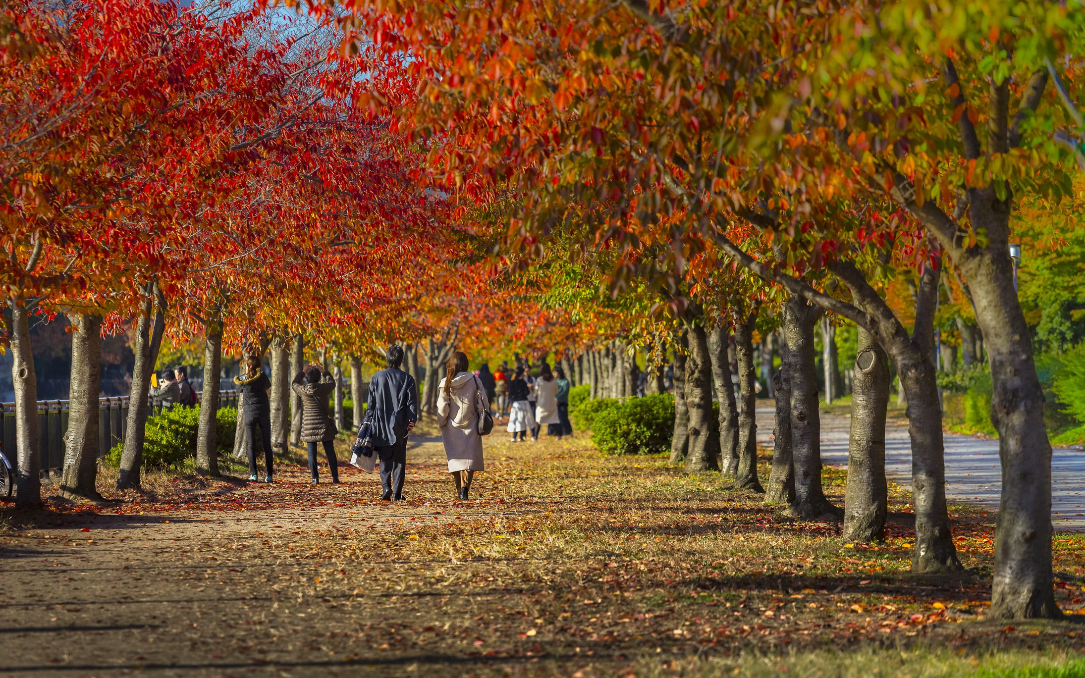 Tourists and autumn leaves in public park next to Osaka Castle, Japan