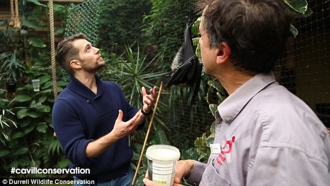 Publicity photo of Henry Cavill at Durrell Wildlife Conservation