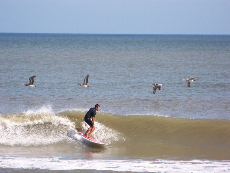 surfing florida