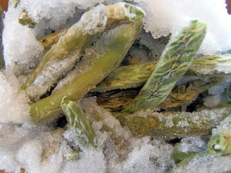 Freezer Burned Green Beans