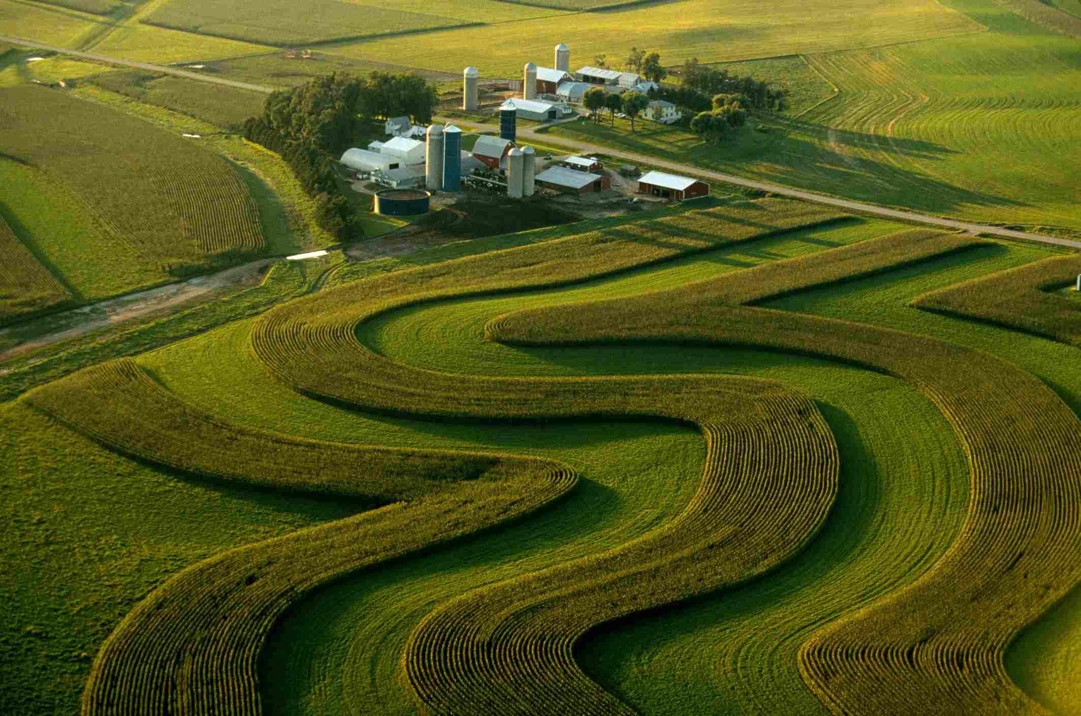 Contour farming, Minnesota, USA, aerial view
