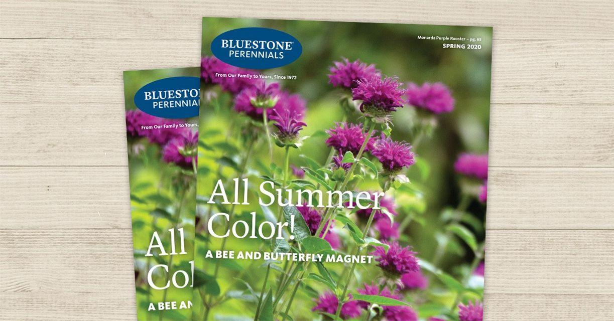 The cover of the Spring 2020 Bluestone Perennials catalog