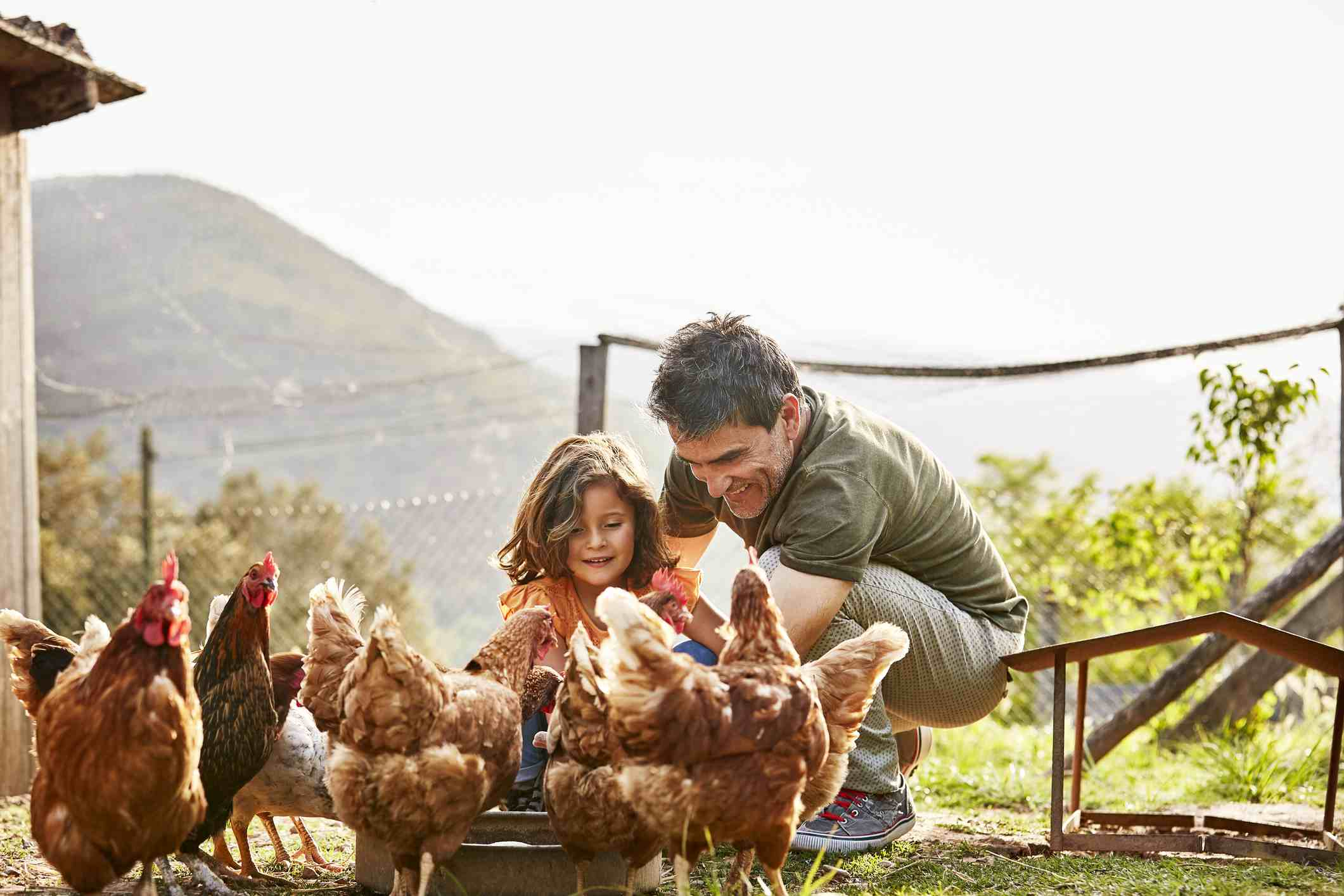Father and daughter feeding chickens