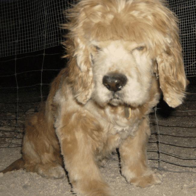 Dog with bad bangs haircut