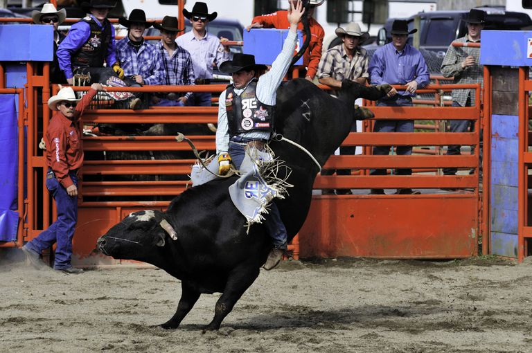 Cowboy bull riding at the Luxton Pro Rodeo in Victoria, BC.
