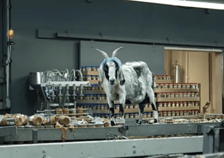 The 14 Most Hilarious Screaming Goat Videos