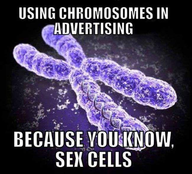 Sex Cells joke