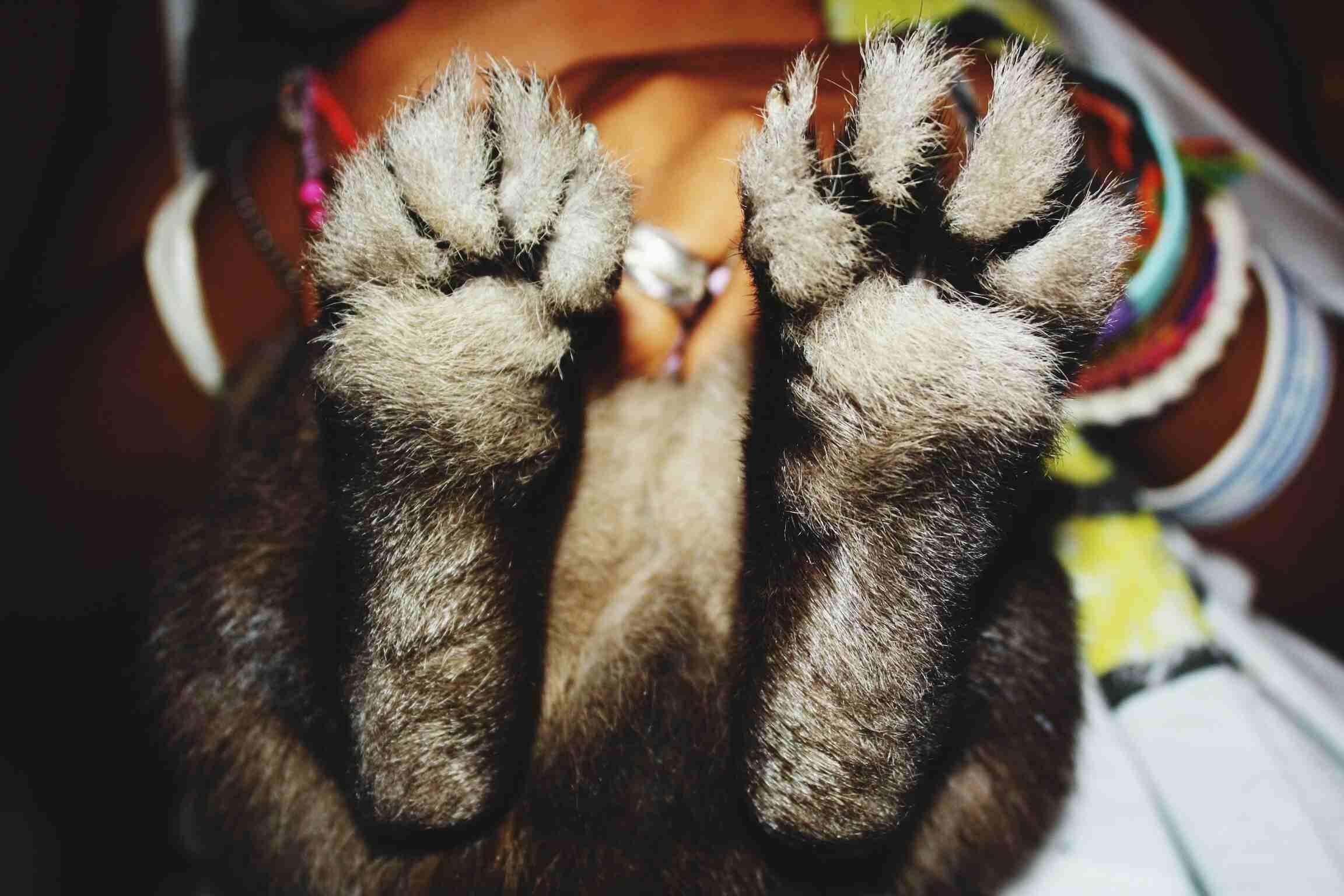 Close-up of rabbit feet