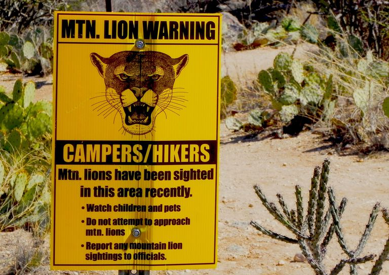 Mountain lion warning sign on hiking trail
