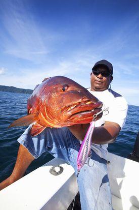 Pacific cubera snapper