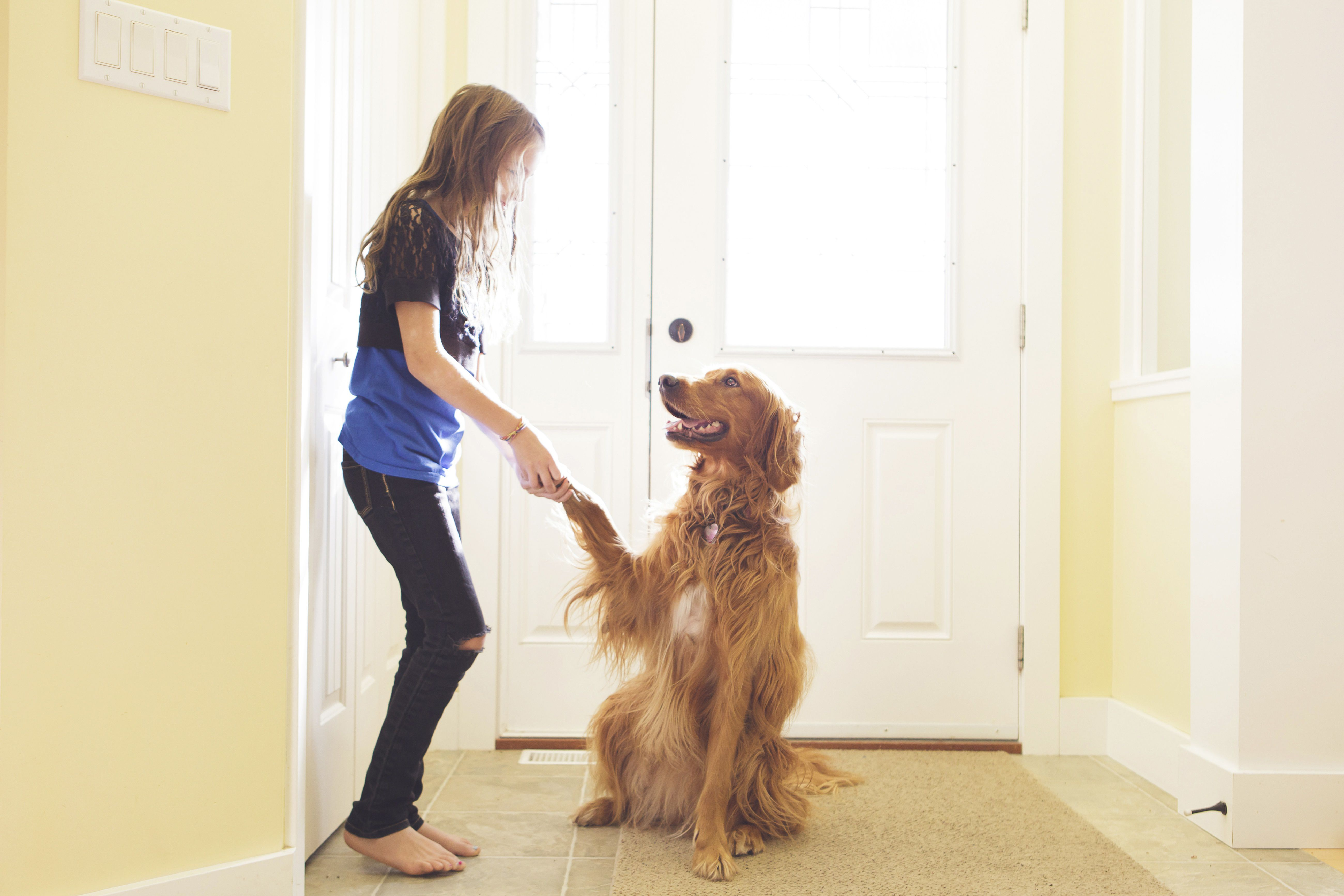 Girl training dog to shake paw