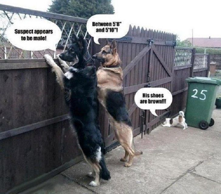 dogs looking over and under a fence