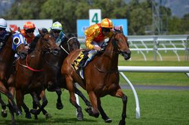 Thoroughbred horses racing around the track on a sunny day.
