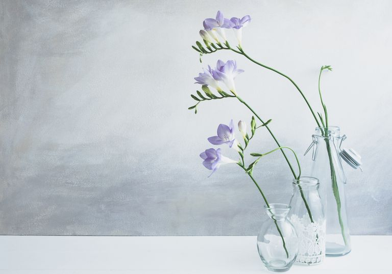 Pastel - purple freesia