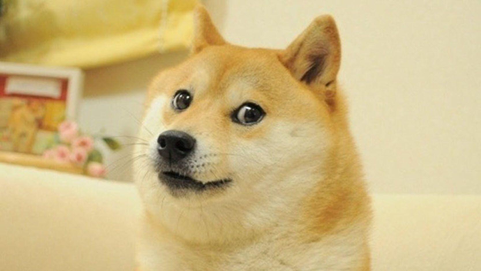 Shiba Inu dog giving sideways glance in viral Doge meme