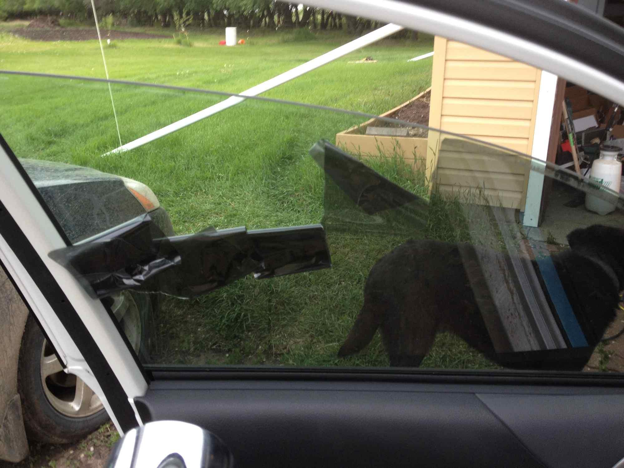 Three Ways to Remove Window Tint