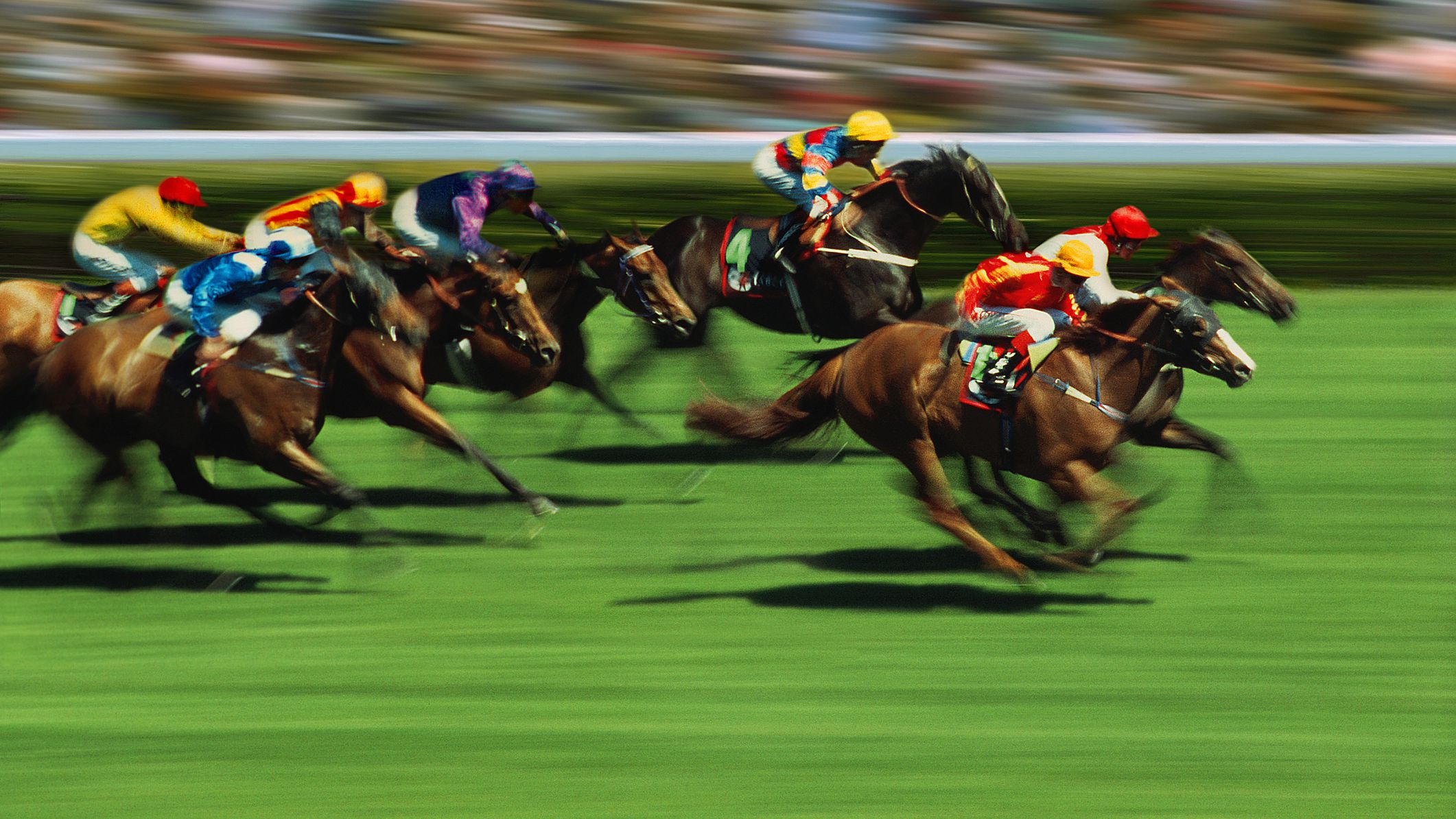 Greyhound racing betting terms horse bodog betting rules of texas