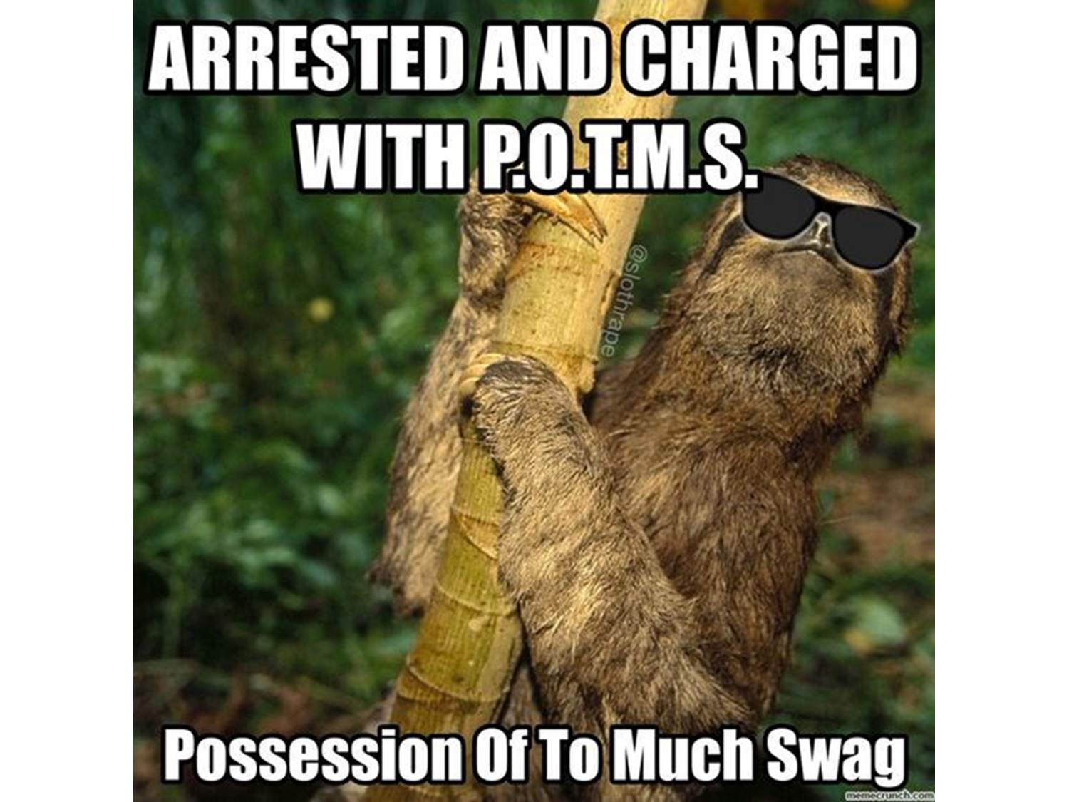 Sloth with shades.