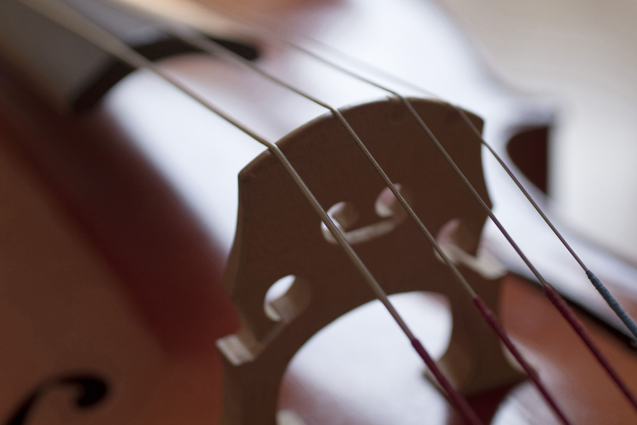 Close up of instrument strings